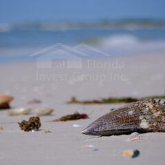 Cape Coral Florida Beach